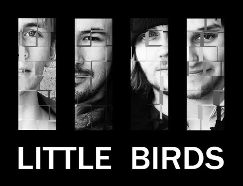 bild little birds